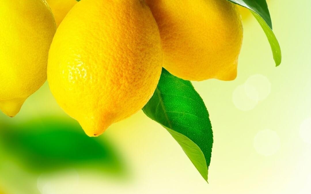 Lemon Lush Squares